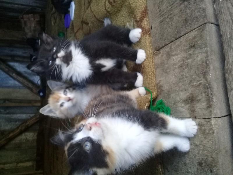 Бездомные котята - 2.