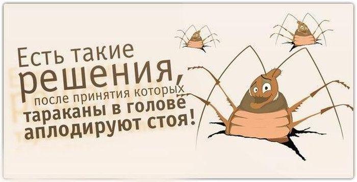 нежность юмор картинки про тараканов только горячими, остывшая