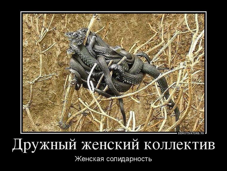 рыбок нет ничего ядовитее чем дружный женский коллектив картинка сергеевич поздравит