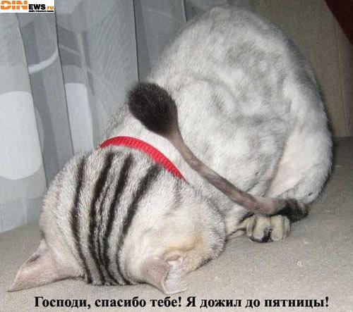 Ольга, Россия, Сочи. Фото на сайте ГдеПапа.Ру