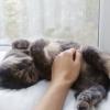 Лены са кошками