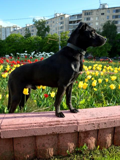 Олеся, Россия, Москва. Фото на сайте ГдеПапа.Ру