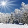 светлана зима