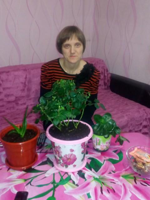 Розы мейяна фото красавица