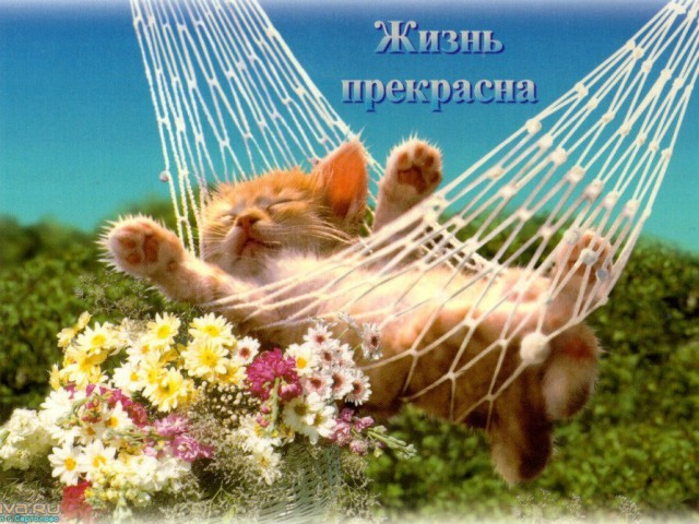 татьяна татьяна, Россия, Нерехта, 44 года