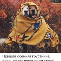 Роман , Россия, Москва, 40 лет
