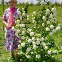 ИРИНА, Россия, Тихорецк, 59 лет