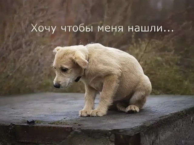 Максим, Россия, Севастополь, 28 лет. Хочу найти Хочу встретить любимую для создания семьи Дети меня не смущают.